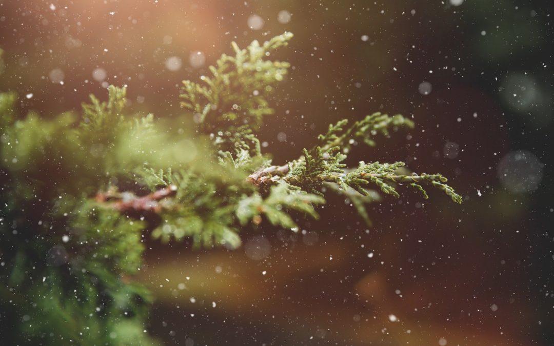 Winterzeit ist Planungszeit! Warum JETZT die beste Zeit zur Planung deiner Gartenprojekte ist, erfährst du hier im Blogpost.