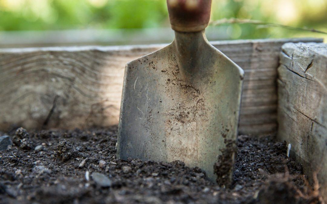 Lerne Deinen Garten kennen, um ihn erfolgreich mit Pflanzen zu gestalten