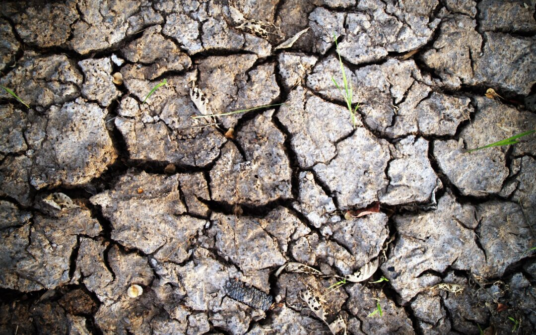 Lehmboden verbessern und auflockern