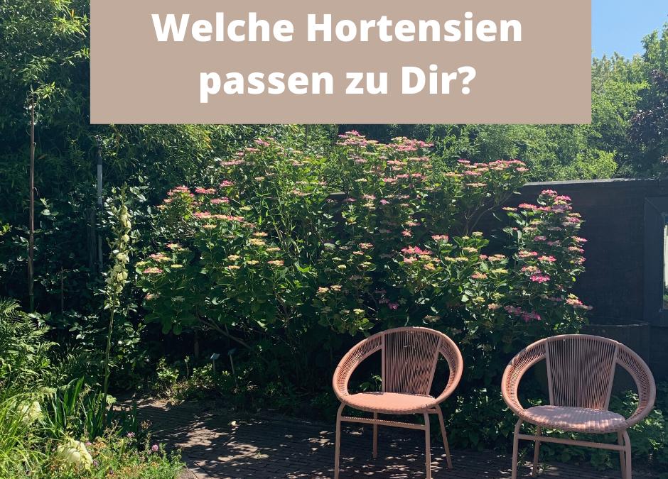 Welche Hortensien passen zu Dir und Deinen Gartenbedingungen?