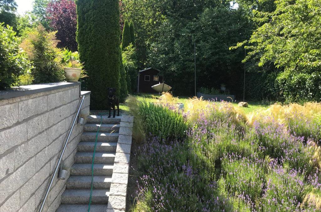 Hangbeete richtig bepflanzen: Das solltest Du beachten bei der Pflanzenwahl.