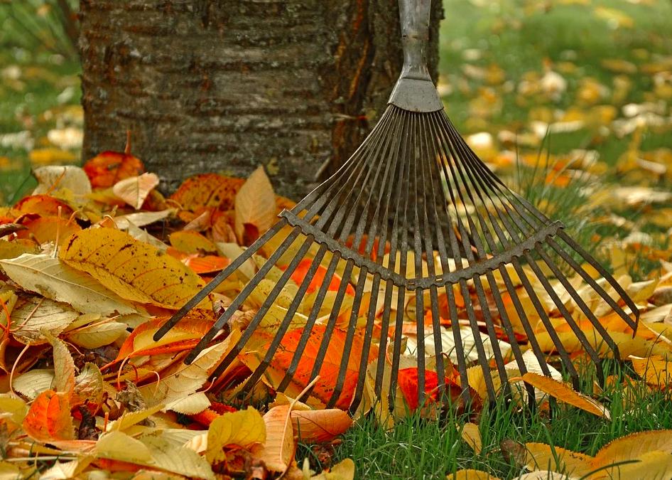 4 Tipps für deine Pflanzen im Herbst
